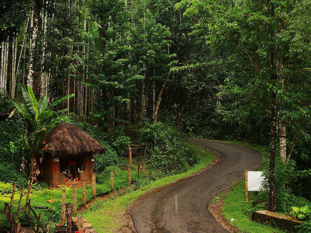 Agumbe Monsoon