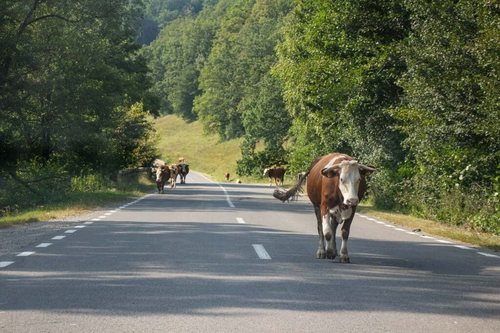 animals on the highways